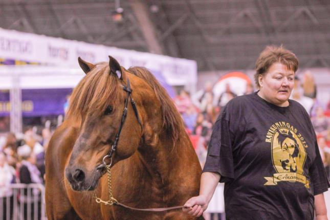 hevonen esittelyssä
